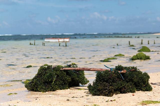 Seaweed Loading