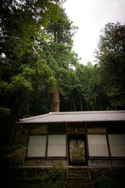 #13 The Giant Cryptomeria of Matsuda Shrine