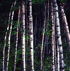 [フリー画像素材] 自然風景, 森林, 樹木 ID:201208030600