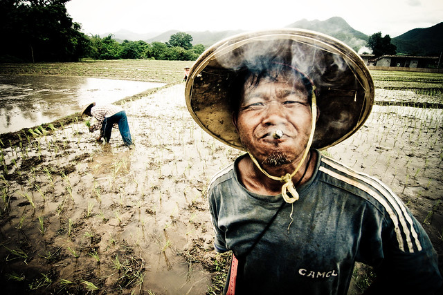 Rice Paddy Portrait Smoker