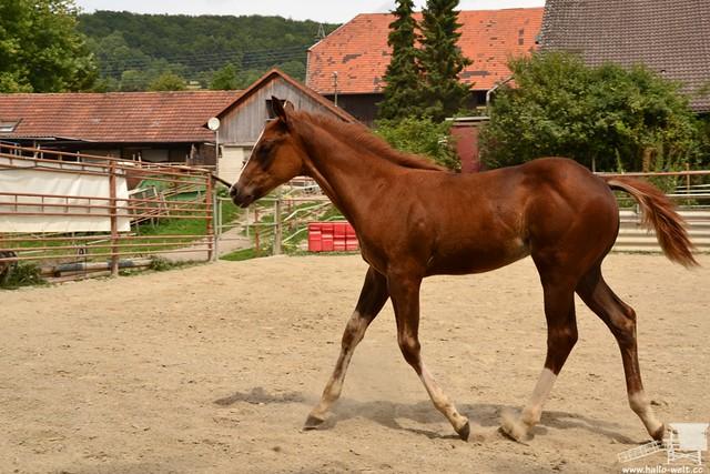 Pferdehof (21)