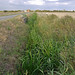 Small photo of Rushy Ditch on Marsh Lane