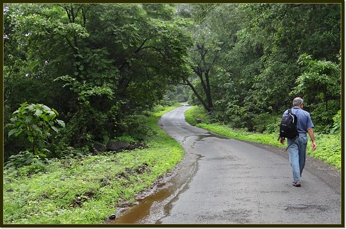 Road through forest: Suryamal to Parali
