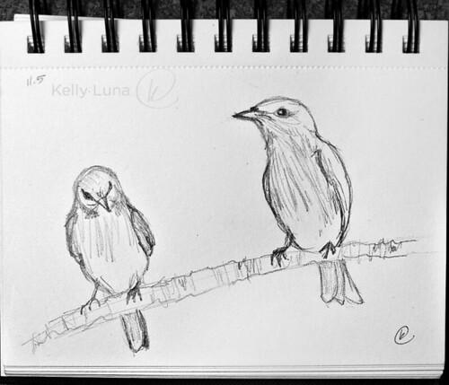 11-5 bluebirds