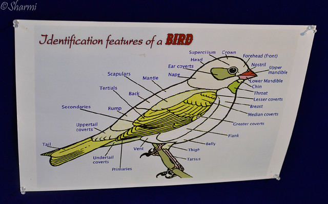 birdidentification