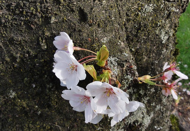 Blooms against bark
