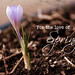 For the Love of Spring by Denise @ New Mercies I See