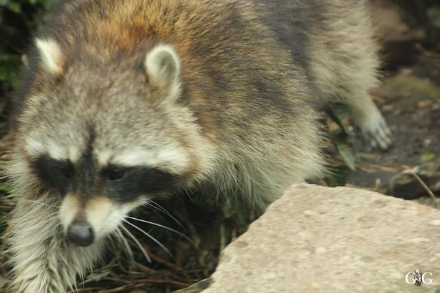 Zoo Am Meer 30.04.201645