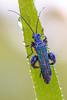 Blue Jewel II