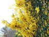 fiori di maggio che sbucano