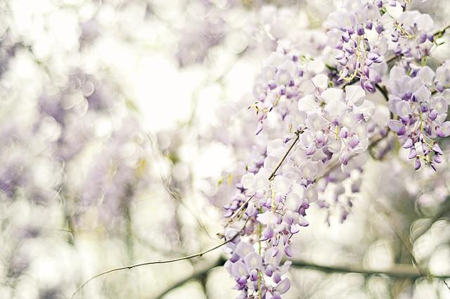 spring-flower-2012