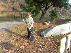 Recogiendo hojas