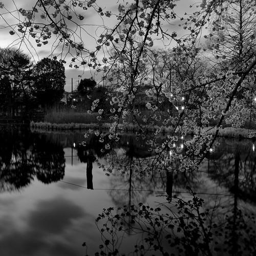days (Apr. 2012)-8