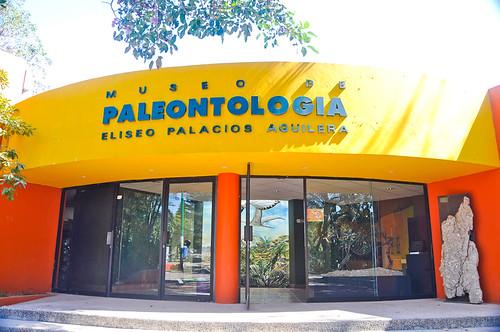 Museo de Paleontología (25)