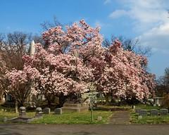 Woodlawn Cemetery, Bronx, New York City
