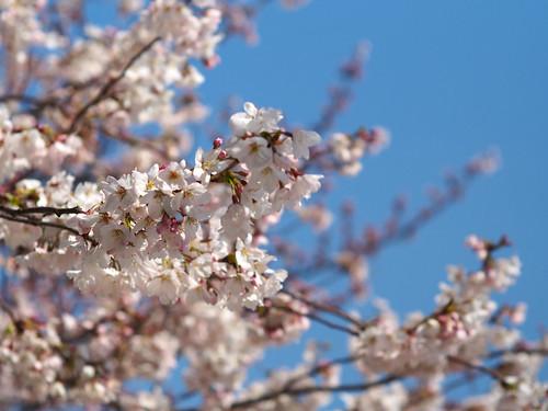2012-04-04 @ Tsuruma Park