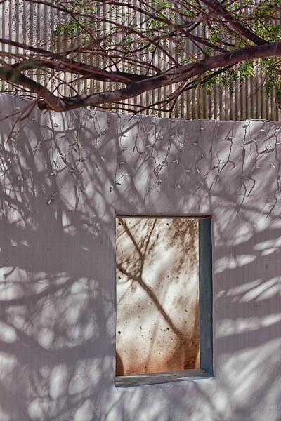 Tree Shadows, Watching