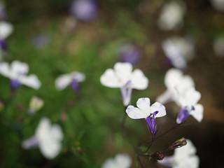꽃(Flower)
