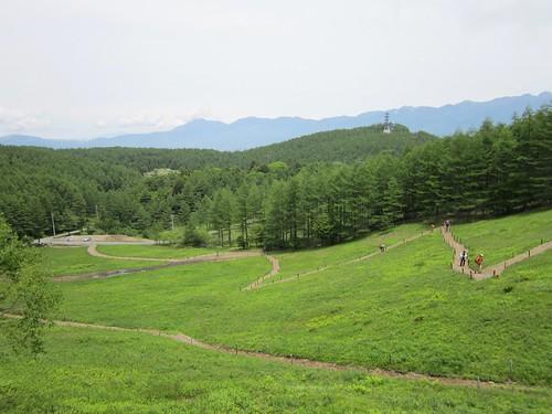 入笠山花畑付近 2012年6月32日 by Poran111
