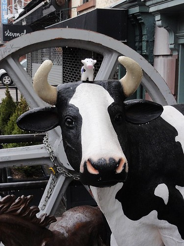 Cow on cow in Brooklyn