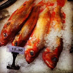 fish, fish, seafood, red, red snapper, food,