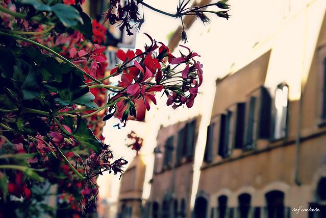 {rome} - beautiful morning