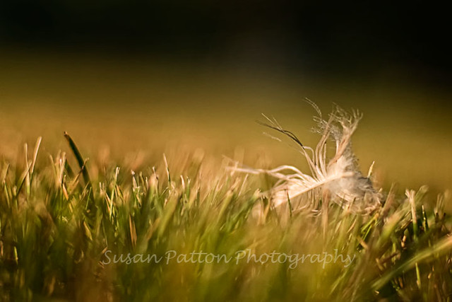 wfeather_in_grass