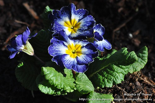 188-366 Blue flower