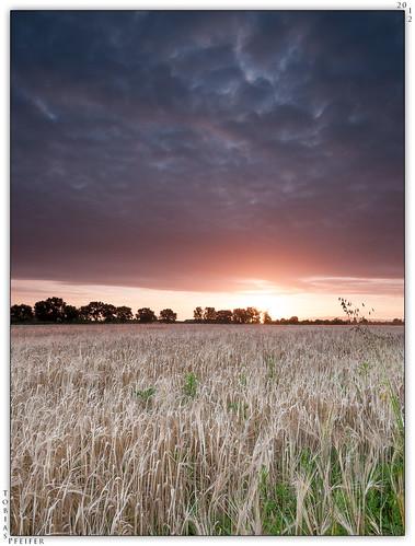 barley clouds sunrise landscape nikon dramatic wideangle manfrotto190xprob tokinaatx116prodx nikond300s siruik30x hitech09hardgrad100mmx150mm hitech06hardgrad100mmx150mm