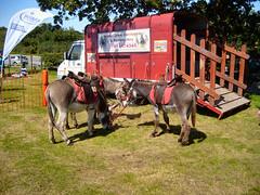 Craft Fair Cheshire Fair Grounds