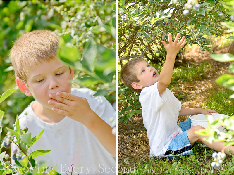 Blueberry Picking-014d.jpg