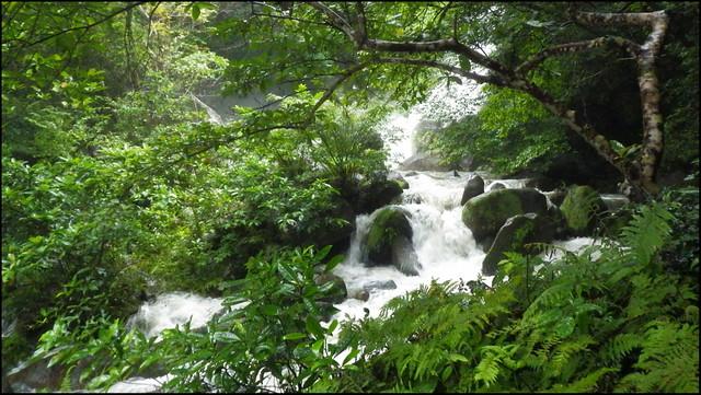 JUNGLE RIVER BELOW TODOROKI FALLS