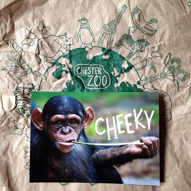 #monkey #postcards #cheeky