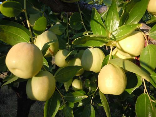 fruit 018