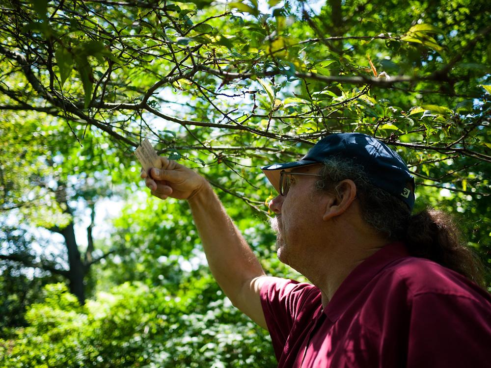 Arnold Arboretum 13