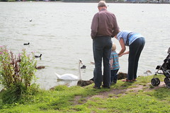 Feeding the swans and ducks