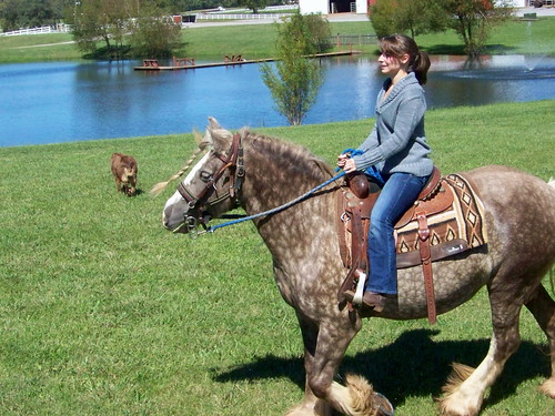 horse farm tennessee riding kelly horseback shelbyville clearview