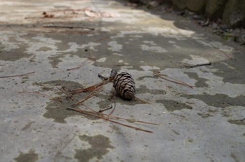 woodsy pinecone