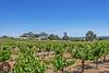 Wine Country California-Central-Coast