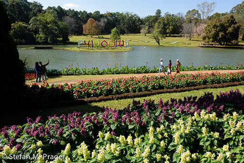 burma blumen myanmar blume birma blümchen botanischergarten pyinoolwin maymyo nationalkandawgyigarden nikond810 pyinoulwin mandalayregion