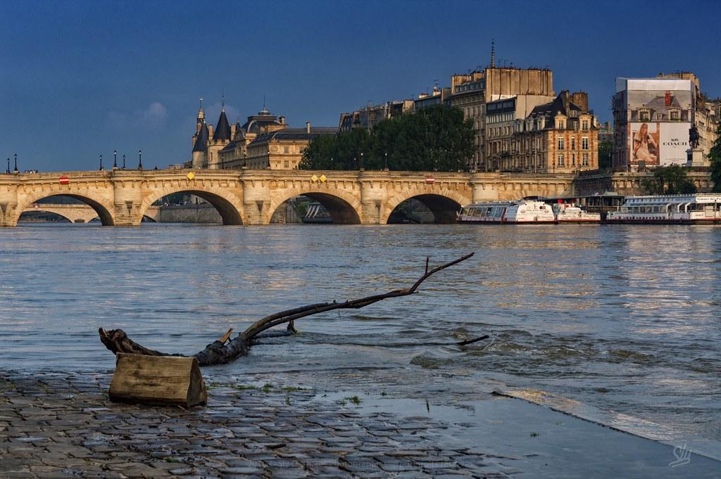 la branche, la Seine et le Pont Neuf