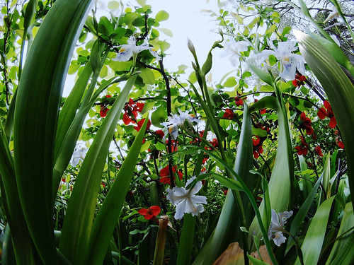 Iris JaponicaⅢ