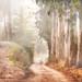 Road Less Travelled Variation by Harold Davis