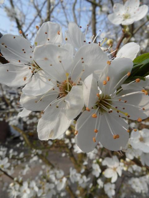 Blossom Stock