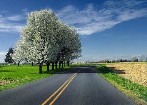 無料写真素材, 建築物・町並み, 道路・道, 樹木, 風景  アメリカ合衆国
