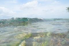 Barbados-2MY_2890