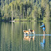 Woman paddle boarding with two dogs