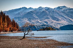 Taking Photos At The Lake Wanaka Tree A Photography Guide