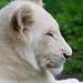 Zoo June 13