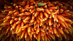 Carrots at Union Square Farmer's Market - Manhattan NYC